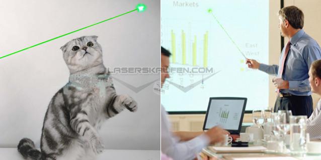 laserpointer katze